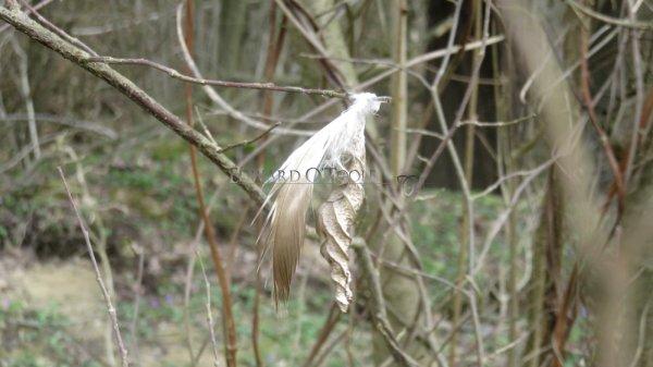 featherleaf