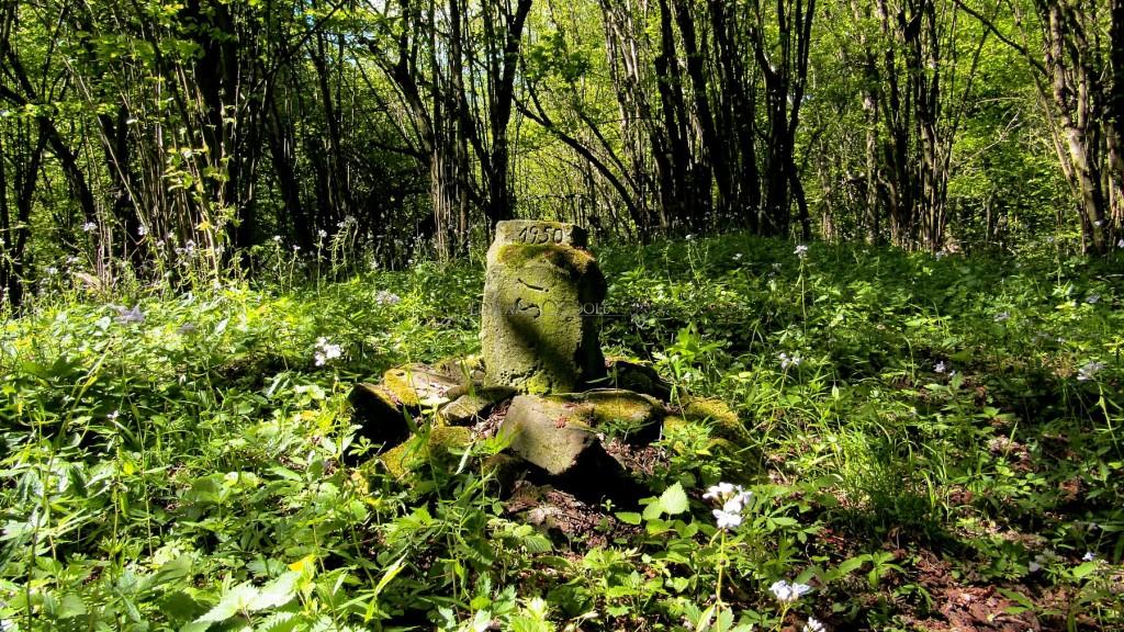 forestgrave