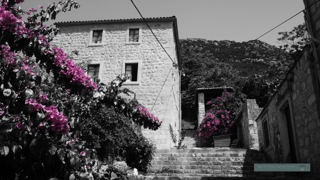 ston croatia flowers