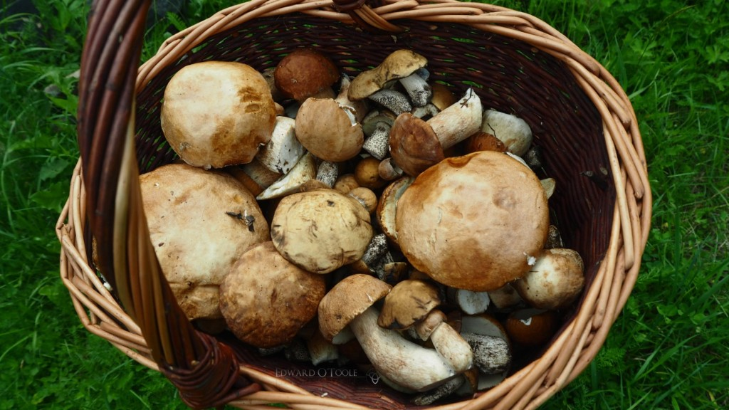 basketofboletes