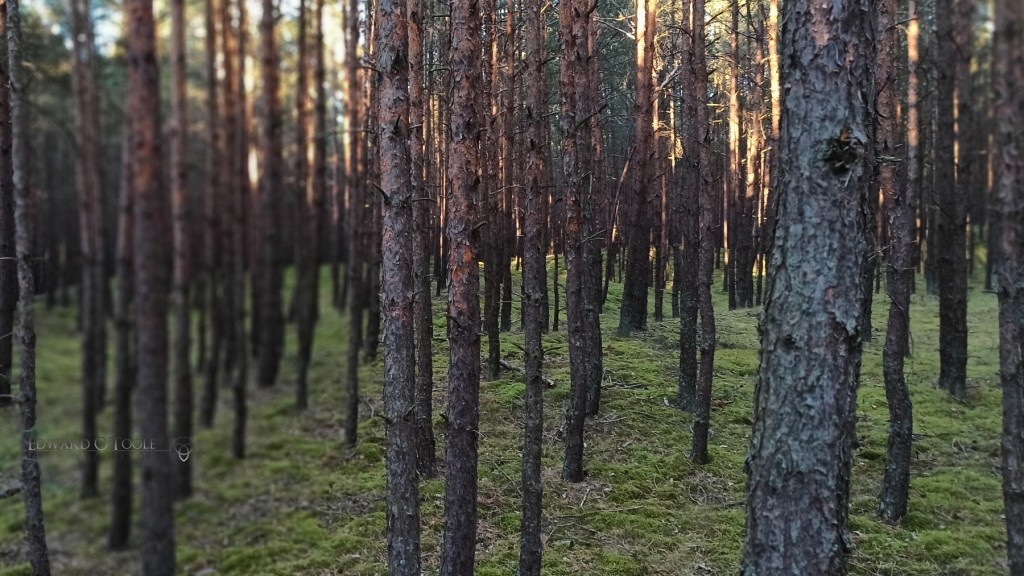 balticforest