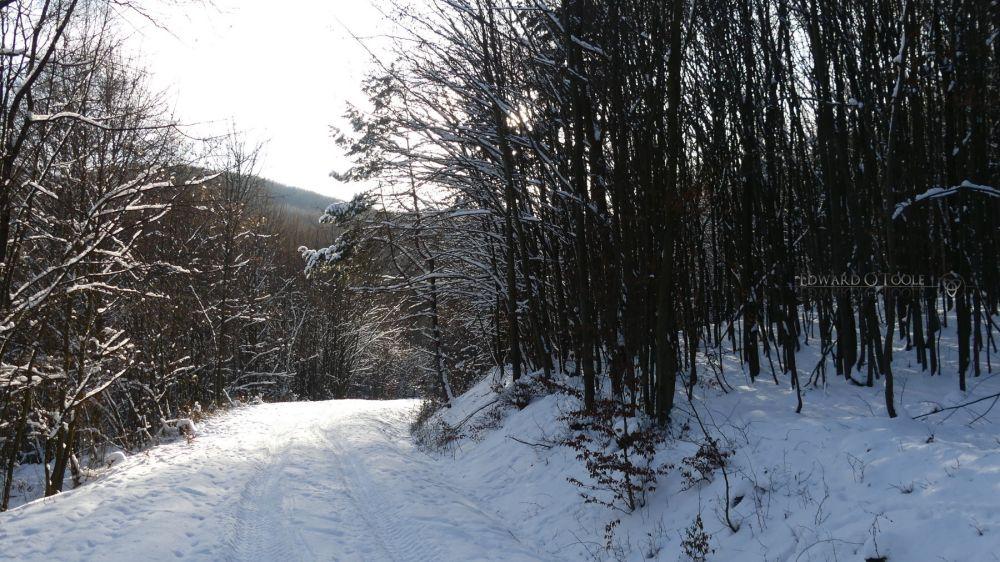 snowforestwalk