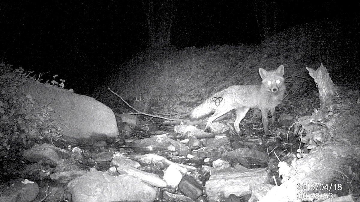 foxir