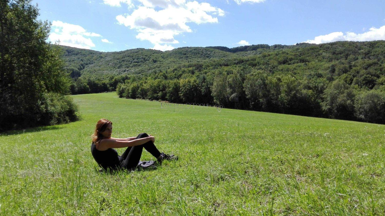 carpathian meadow